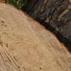 Scarpe antinfortunistiche Lewer mod. Palinuro 460 S3